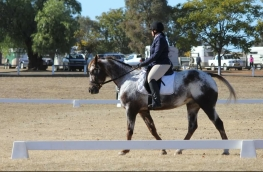 Louise Clay competing in Intro Level Dressage at MUDWEQ, following her successful win in Stroud earlier this year where she took out Introductory Champion!